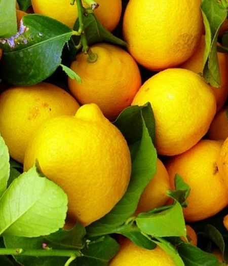 Lemons can be blended whole and frozen into cubes as a refreshing and immune boosting addition to drinks and smoothies.
