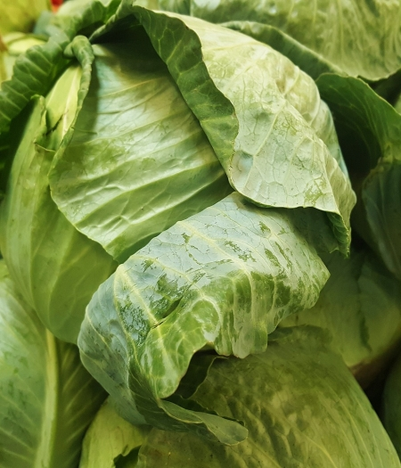 Store cabbage properly to make the most of this long lasting produce.